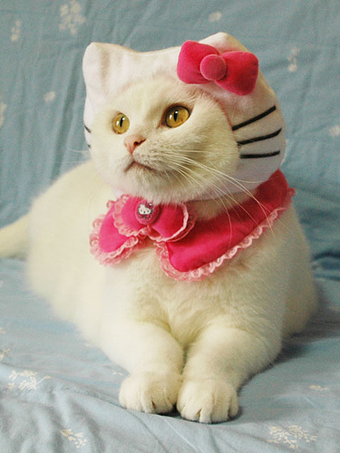cat in hello kitty pet costume
